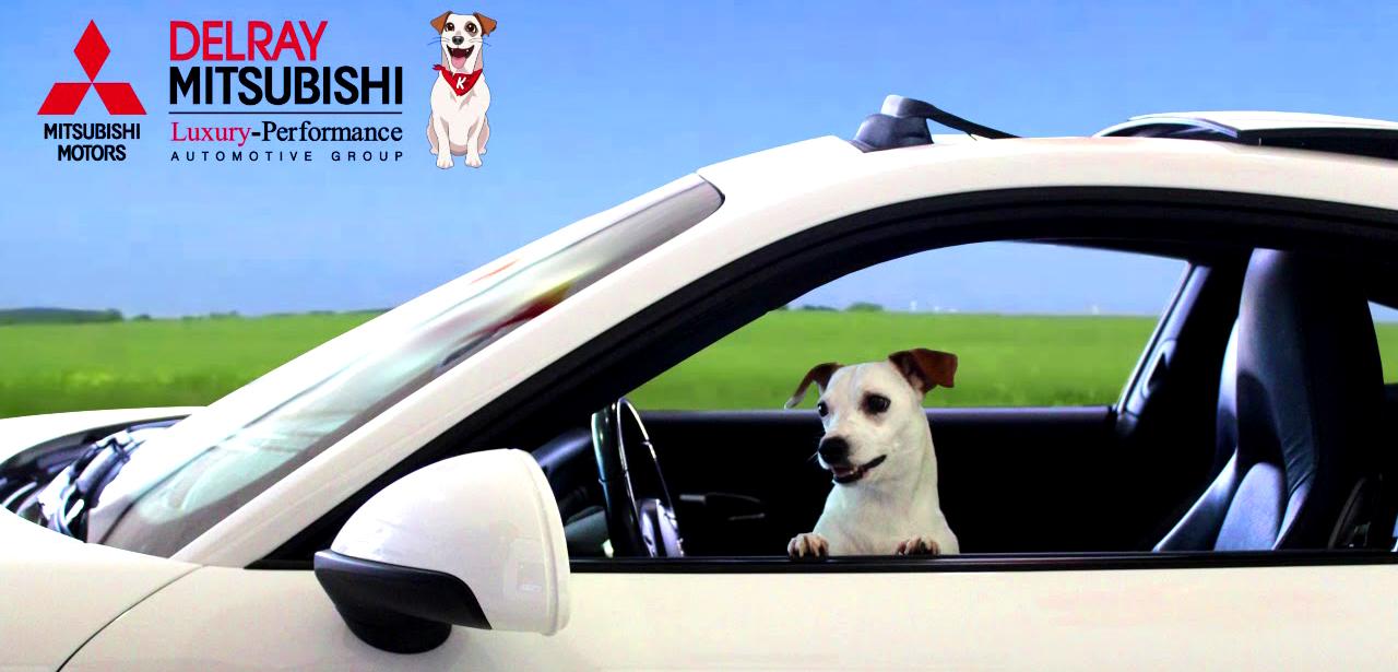 DelRay Mitsu Dog Driving