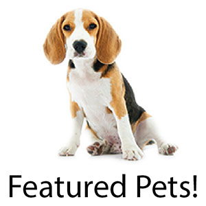 Featured Pets